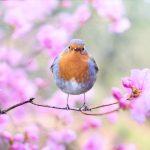 Hygiène et pratiques du printemps