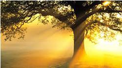 Vivre en harmonie au rythme des saisons et optimiser son professionnalisme